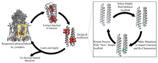 Life Free Full Text Recent Progress Using De Novo Design To Study Protein Structure Design And Binding Interactions Html