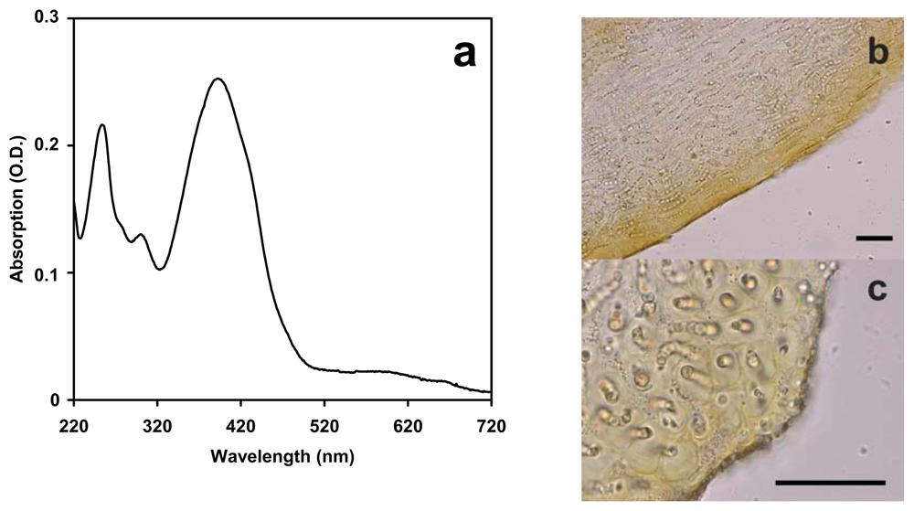 Xanthophyll Absorption Spectrum a Absorption Spectrum of an