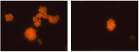 Marinedrugs 10 02698 g002 200