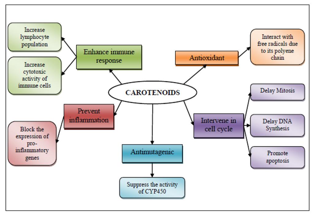 ... chemopreventive/chemoprotective activity of shrimp's carotenoids