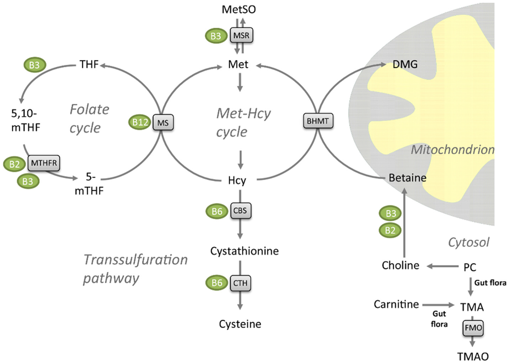 steroidogenesis delta 5 pathway