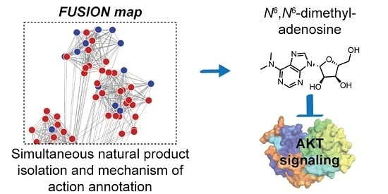 FUSION-Guided Hypothesis Development Leads to the Identification of N6,N6-Dimethyladenosine, a Marine-Derived AKT Pathway Inhibitor