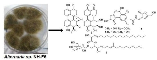 Inhibitors of BRD4 Protein from a Marine-Derived Fungus Alternaria sp. NH-F6