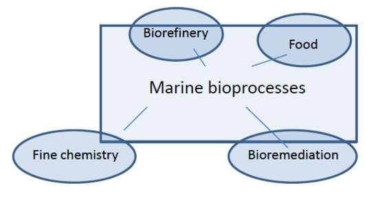 Enzymatic Processes in Marine Biotechnology