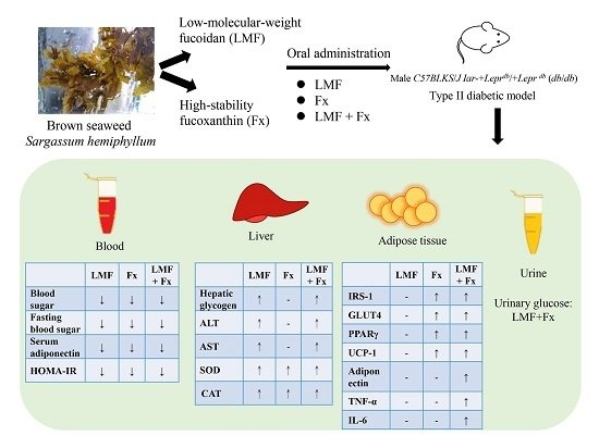 Effects of Low-Molecular-Weight Fucoidan and High Stability Fucoxanthin on Glucose Homeostasis, Lipid Metabolism, and Liver Function in a Mouse Model of Type II Diabetes