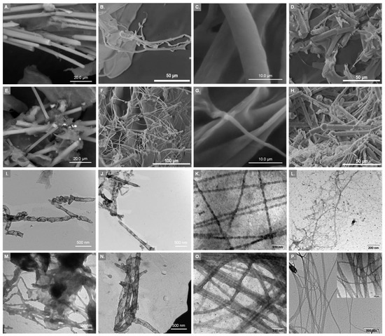Collagen from the Marine Sponges Axinella cannabina and Suberites carnosus: Isolation and Morphological, Biochemical, and Biophysical Characterization