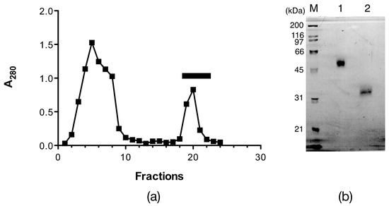 Isolation, Amino Acid Sequences, and Plausible Functions of the Galacturonic Acid-Binding Egg Lectin of the Sea Hare Aplysia kurodai