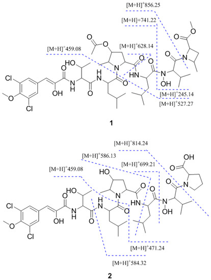 Biosynthesis of natural products: introduction - The Model ...