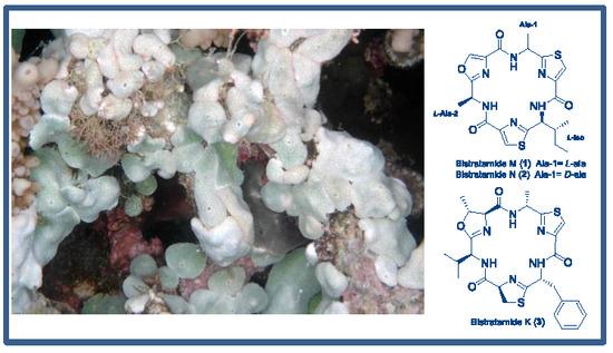 Resultado de imagen de bistratamide k