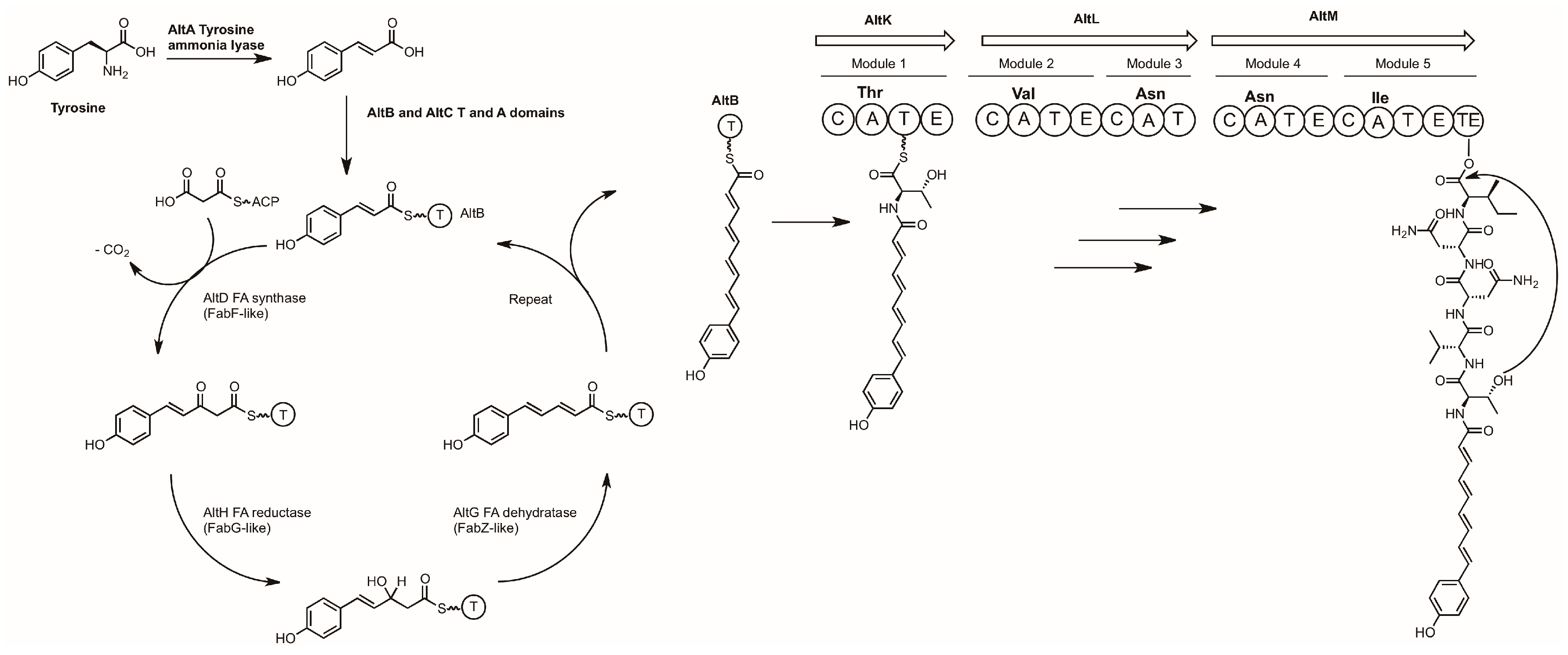 mercedes benz w204 wiring diagram asm marine drugs free full text investigating the biosynthesis of  marine drugs free full text