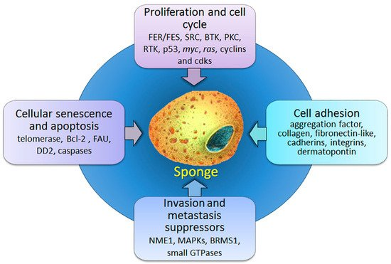 Marine drugs free full text sponges a reservoir of genes marinedrugs 16 00020 g001 550 ccuart Choice Image