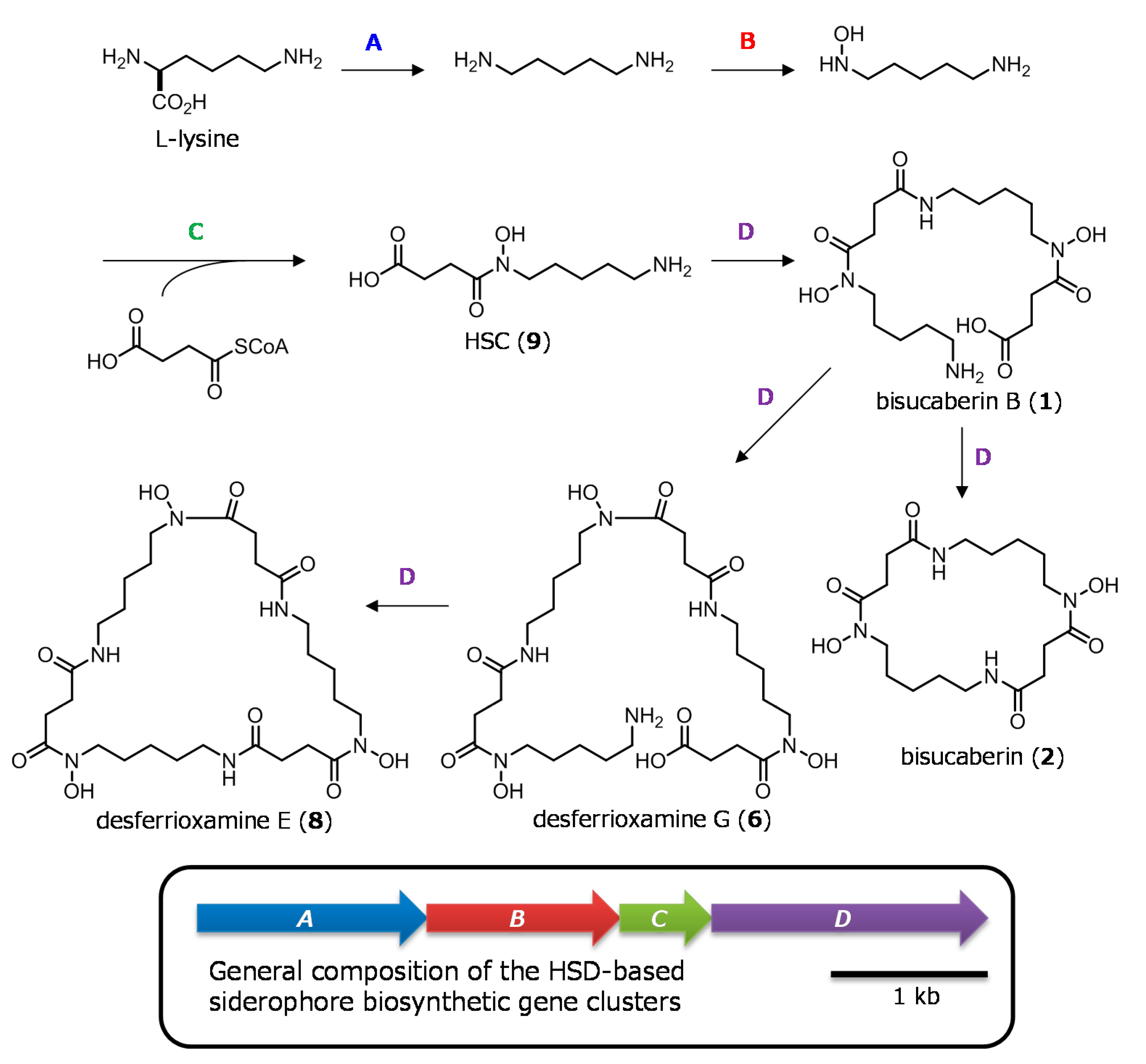 Marine Drugs | Free Full-Text | Cloning of the Bisucaberin B
