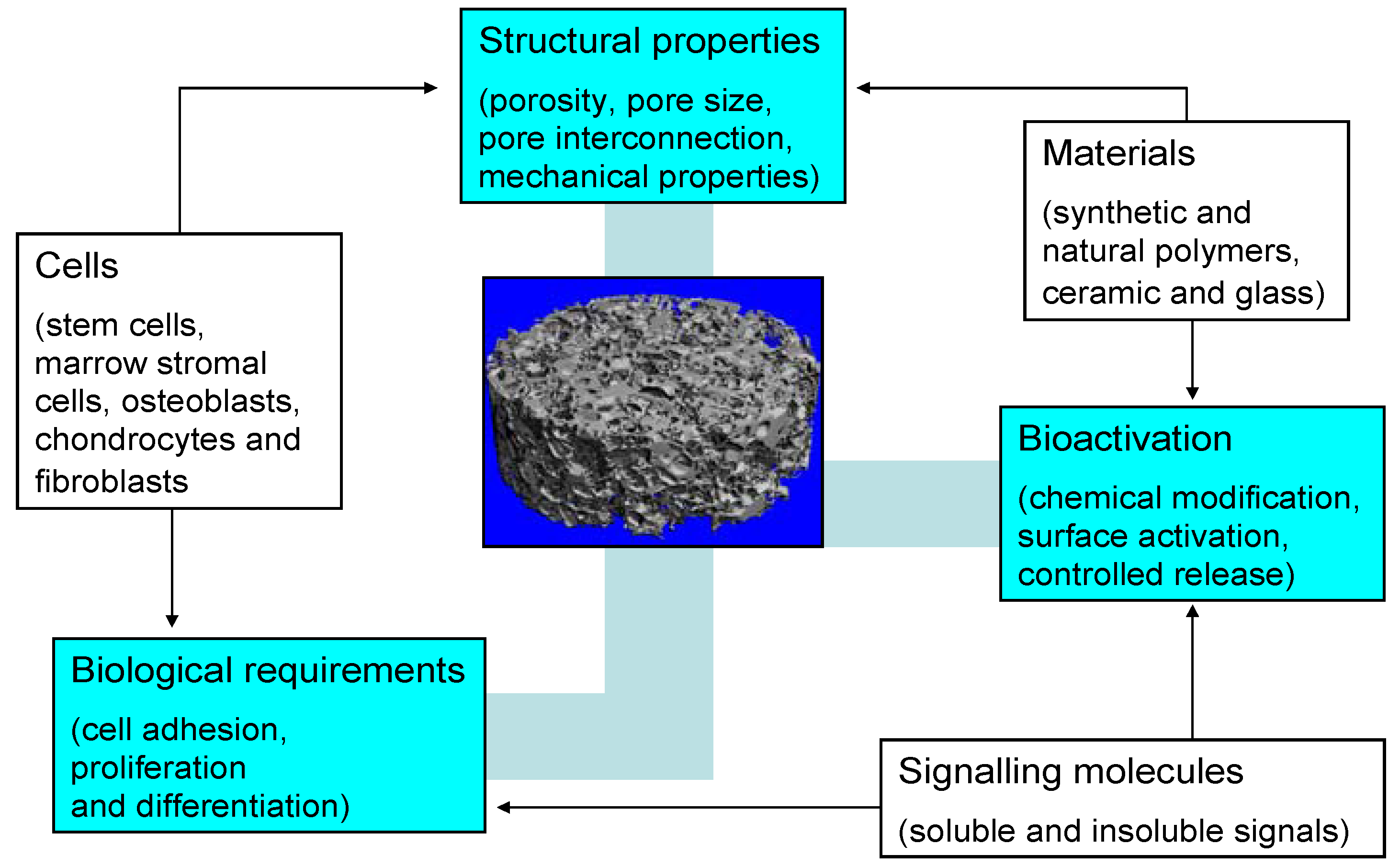 Materials | Free Full-Text | Bioactive Glass and Glass-Ceramic ...
