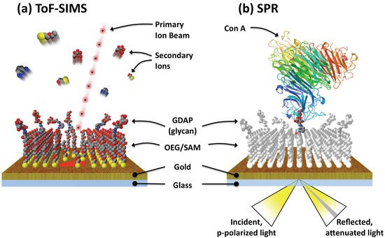 Imaging Analysis of Carbohydrate-Modified Surfaces Using ToF-SIMS and SPRi