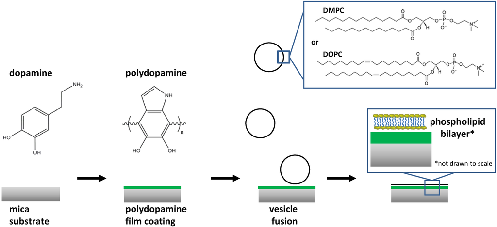 Materials Free Full Text Polydopamine Supported Lipid
