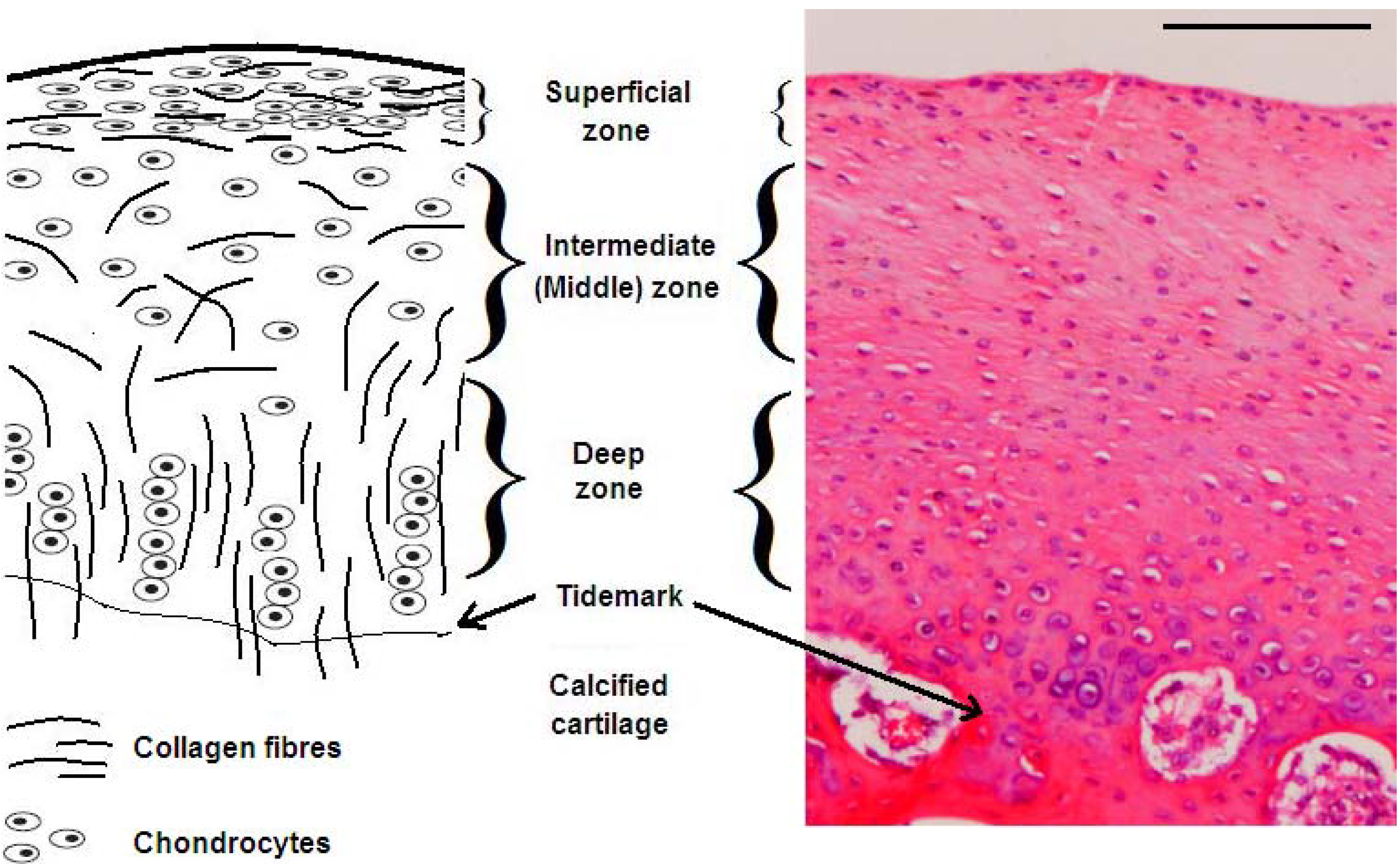 collagen supplements essay   top secret🔥   ☀☀☀ advanced dermatology collagen supplements ☀☀☀ how eating right and the right exercise will better your health the fat burning kitchen - foods that burn fat, foods that make you fat advanced dermatology collagen supplements,get yourself ready for the summer, easy as 1-2-3.