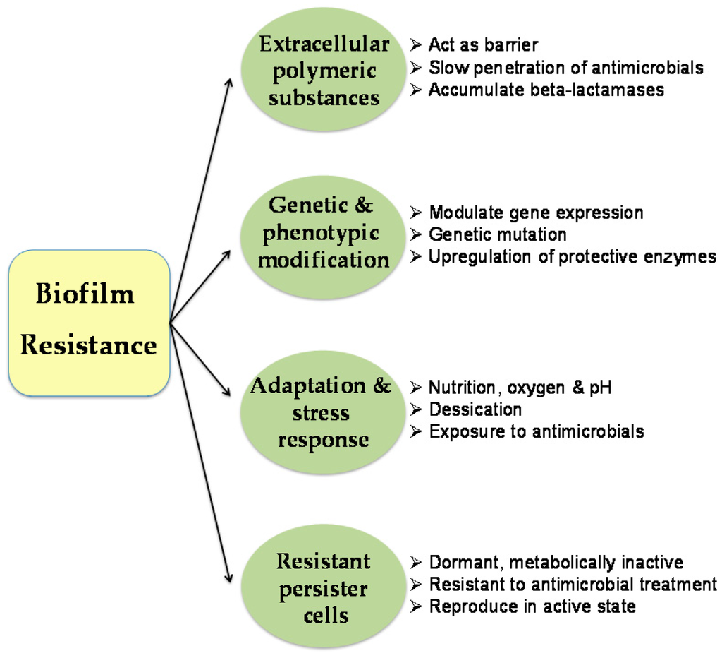 Materials | Special Issue : Biofilm and Materials Science