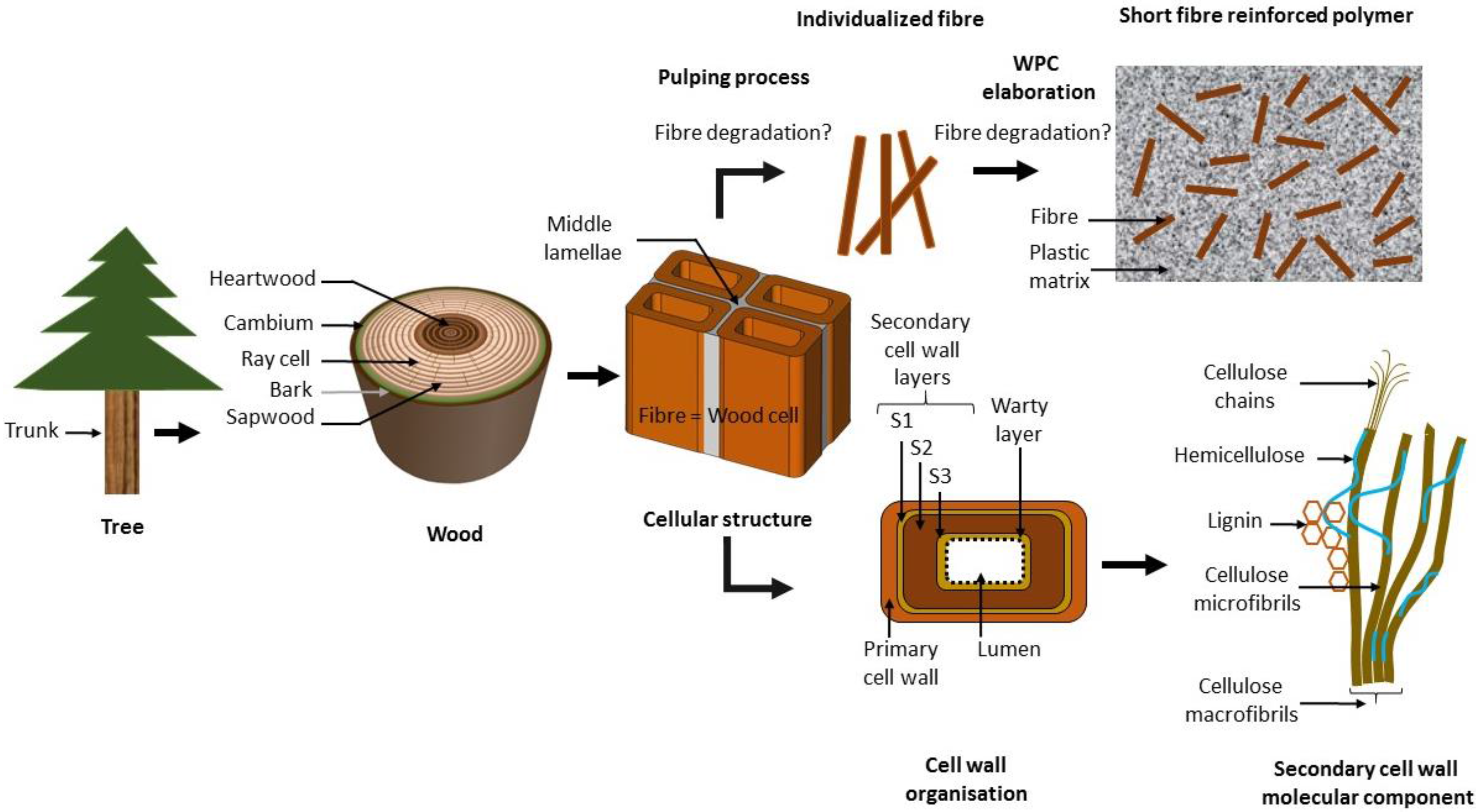 Wood Fibers Diagram Illustration Of Wiring Fiber Optic Wire Materials Free Full Text Plant Fibre Molecular Structure And Rh Mdpi Com Corning Cable