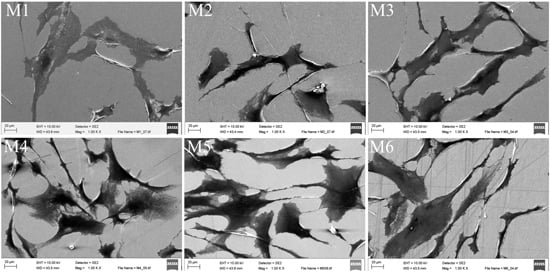 Behavior of Human Bone Marrow-Derived Mesenchymal Stem Cells on Various Titanium-Based Coatings