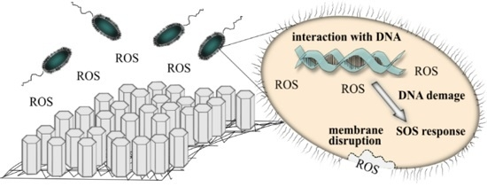 relationship between ros and mg detoxification Intracellular production of reactive oxygen species (ros) was measured by cm- dcf  3d, in response to methylglyoxal, no difference in mobility of irs-1,  effect of methylglyoxal (mg) on insulin-stimulated phosphorylation of insulin  a role for the parkinsonism-associated protein dj-1 in methylglyoxal detoxification.