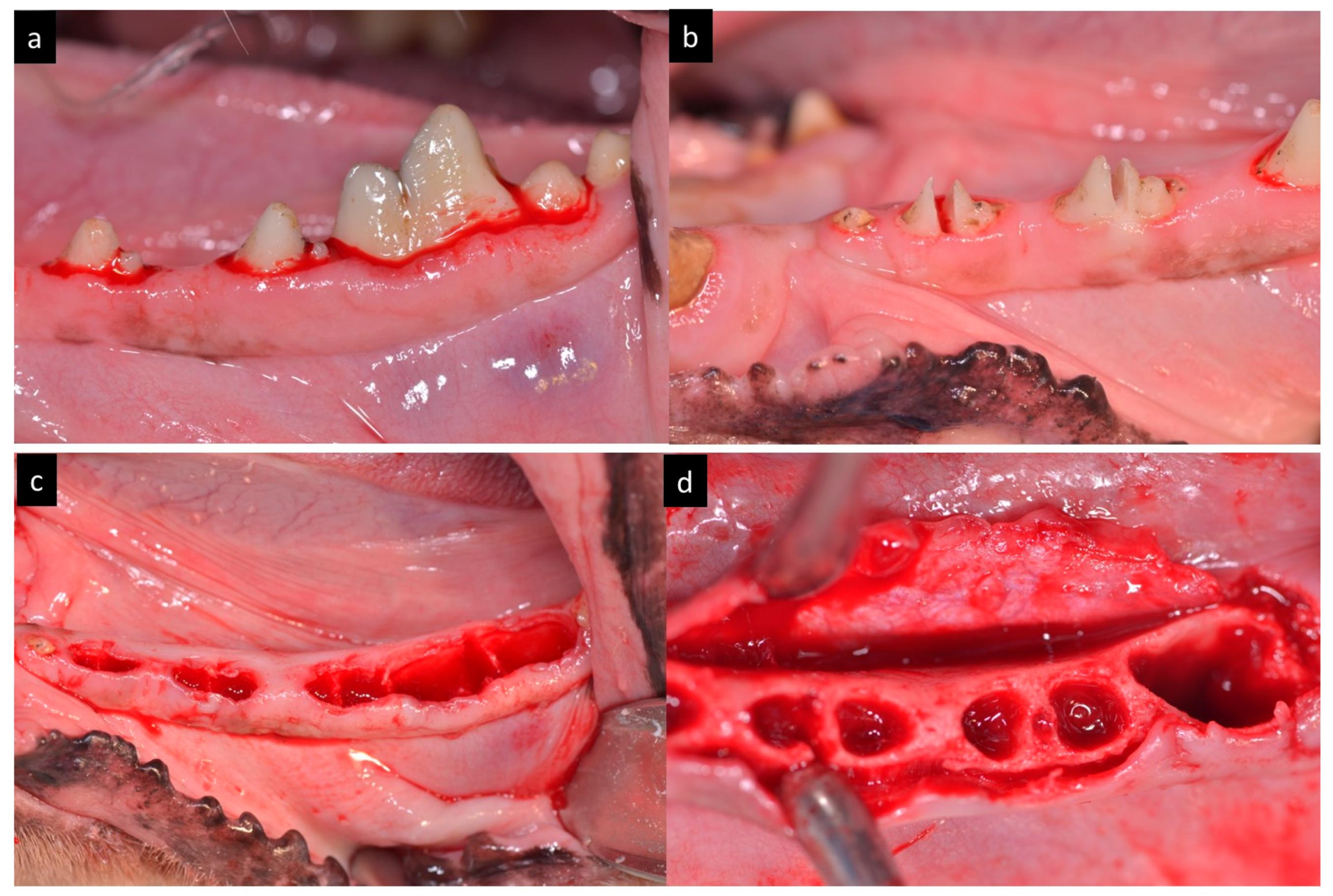 Materials | Free Full-Text | Peri-Implant Behavior of