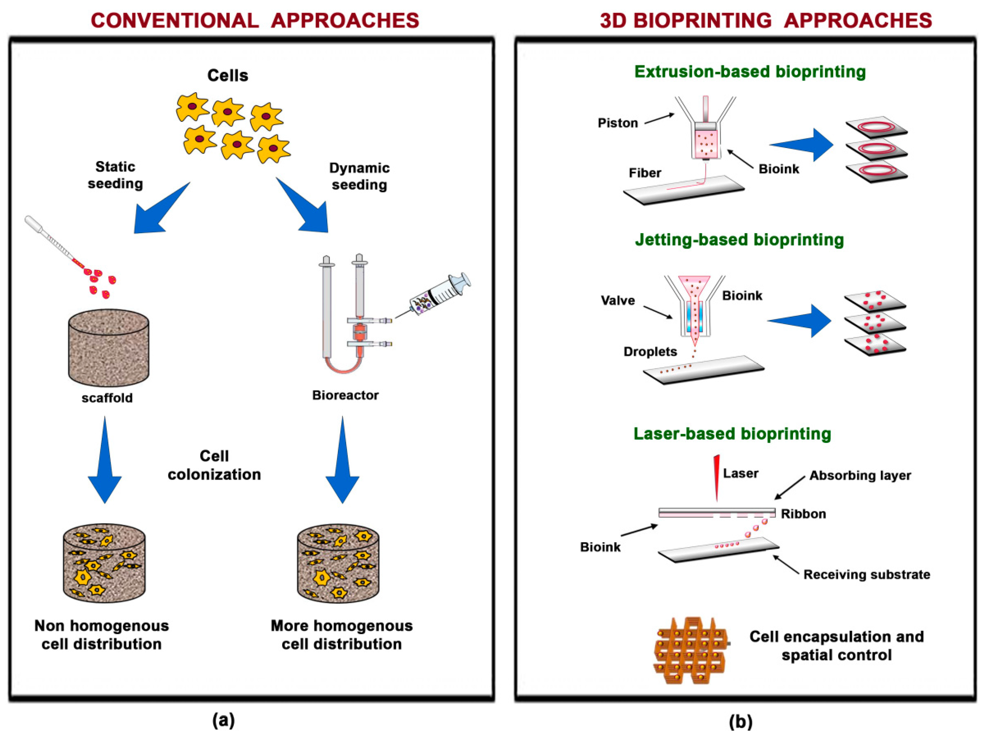 Materials Free Full Text Three Dimensional Bioprinting Of Cartilage By The Use Of Stem Cells A Strategy To Improve Regeneration Html