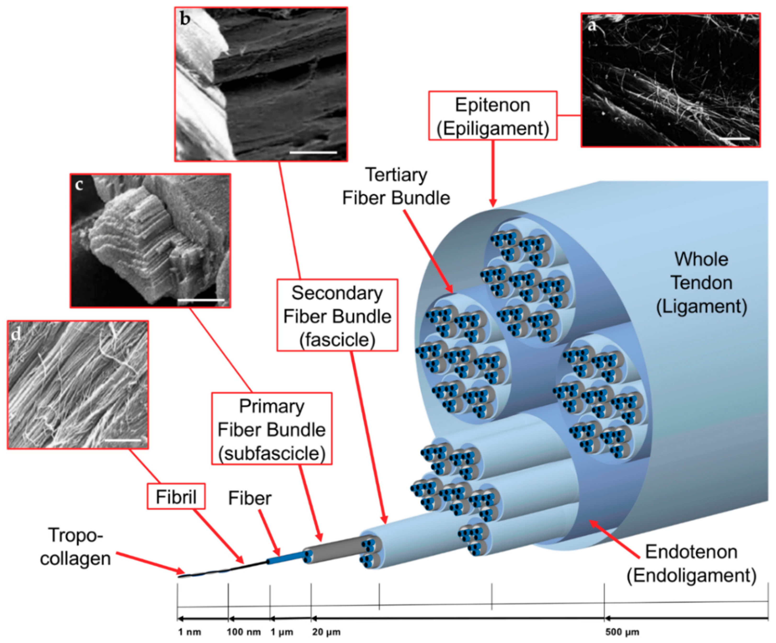 Materials Free Full Text Biofabrication Of Electrospun Scaffolds Surface Mounted Box And Wiring 1407 Chase 11 01963 G001