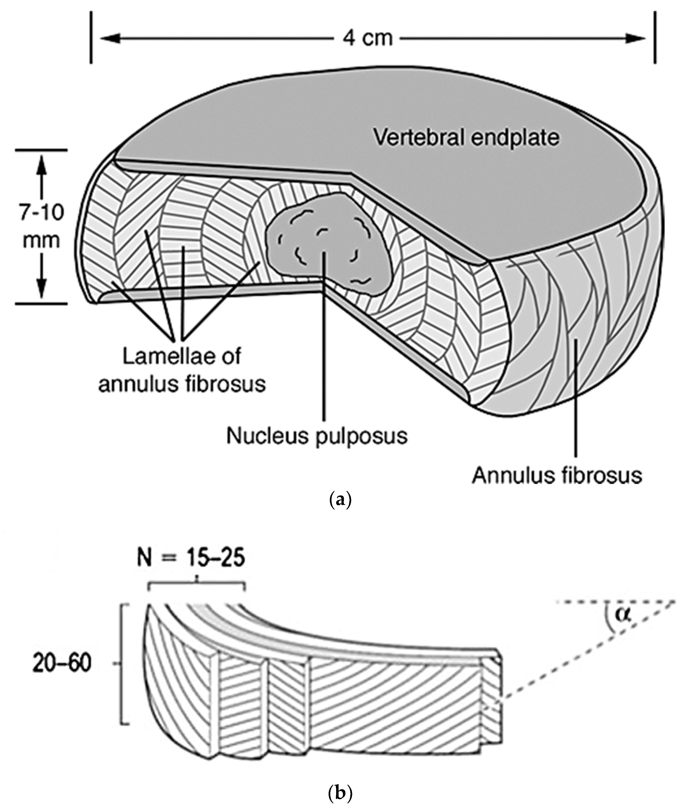 Materials | Free Full-Text | Materials for the Spine: Anatomy