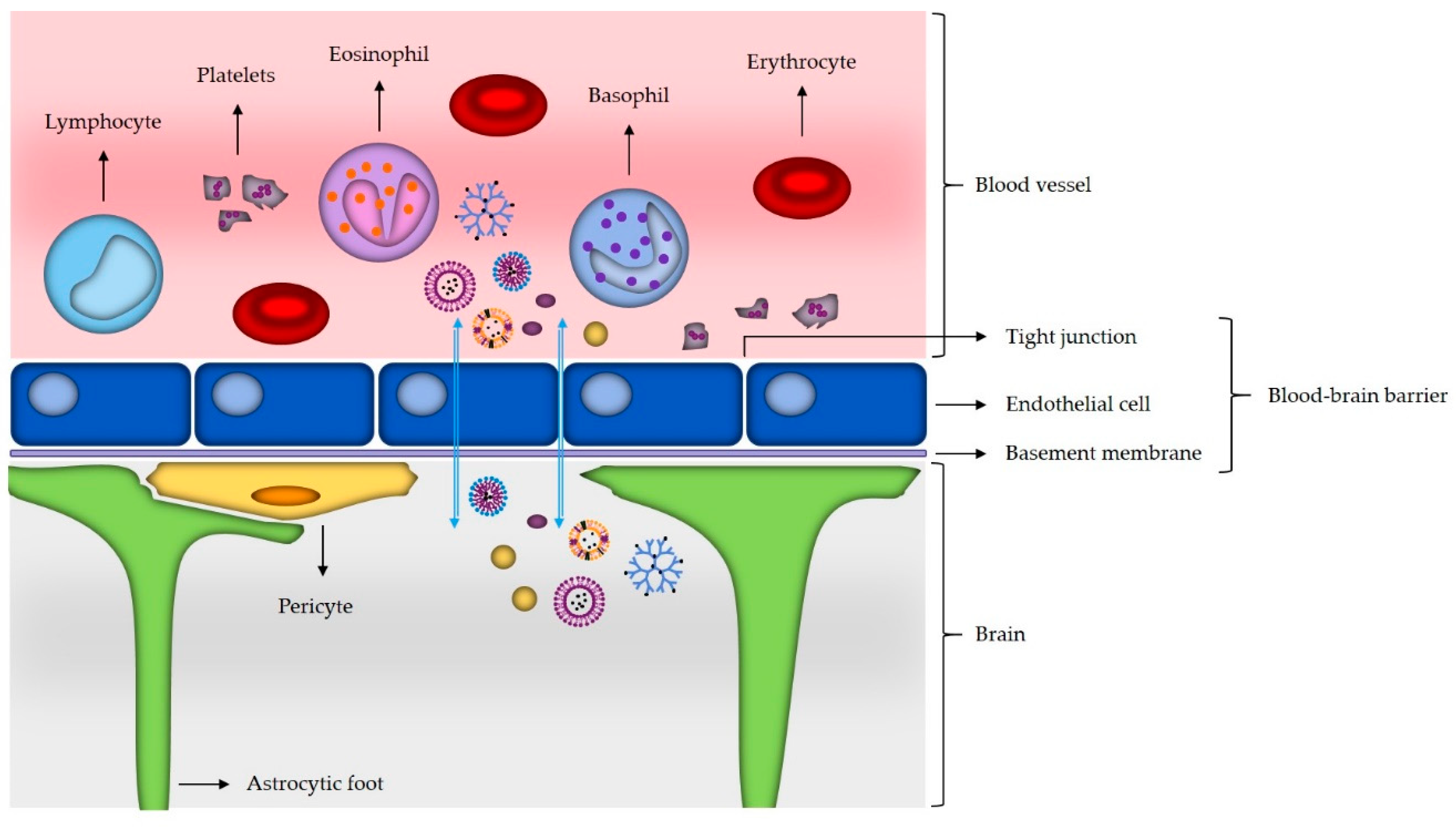 Materials   Free Full-Text   Nanotechnology Meets Oncology