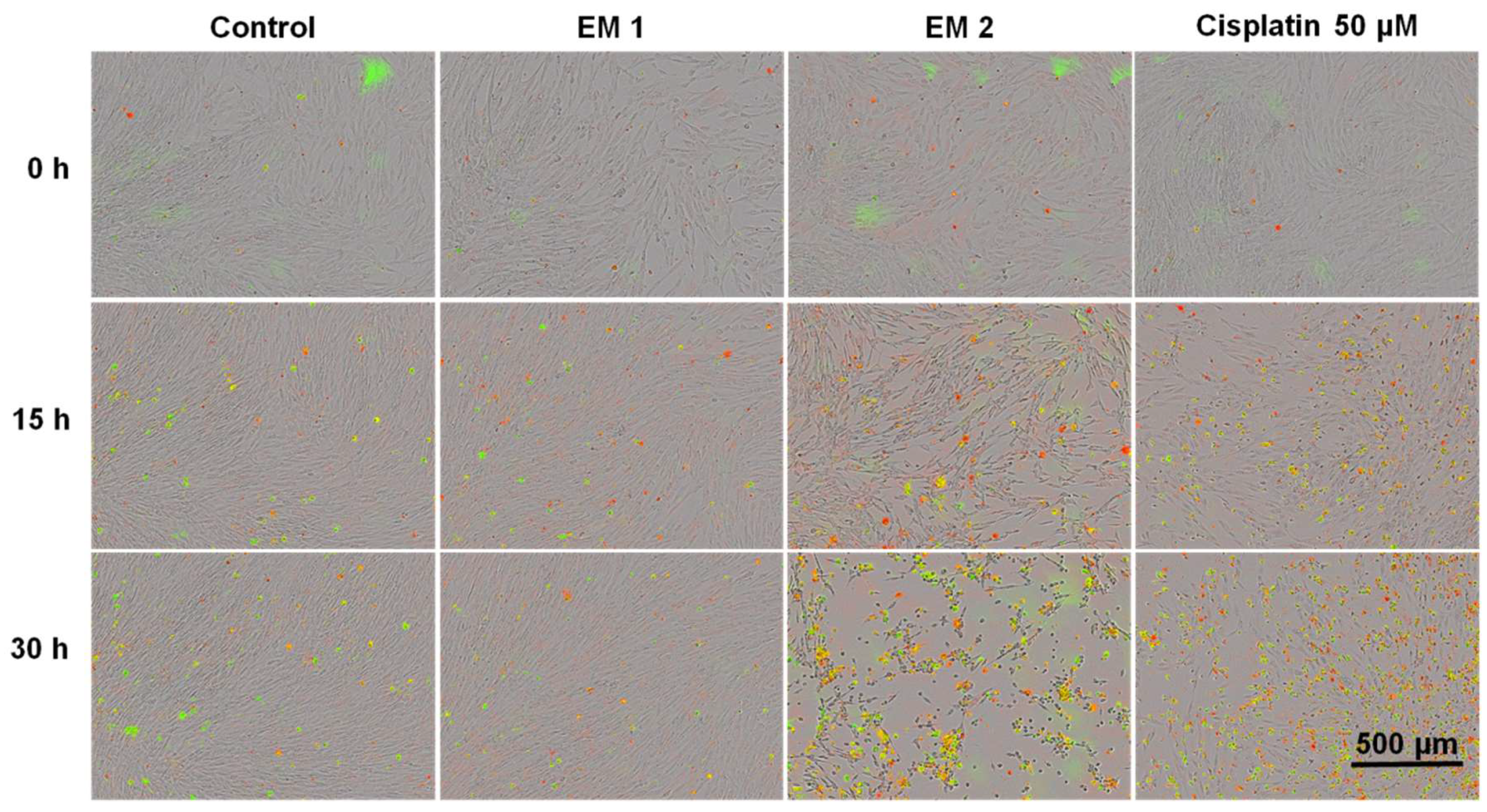 Materials | Free Full-Text | Real-Time Live-Cell Imaging
