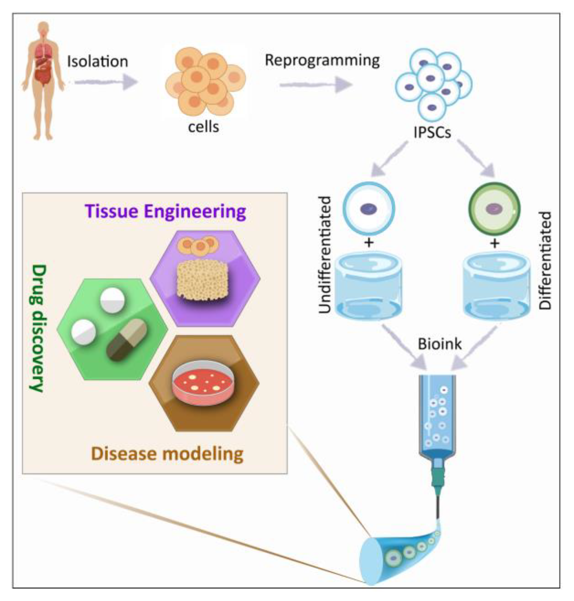 Materials | Free Full-Text | iPSC Bioprinting: Where are We at?