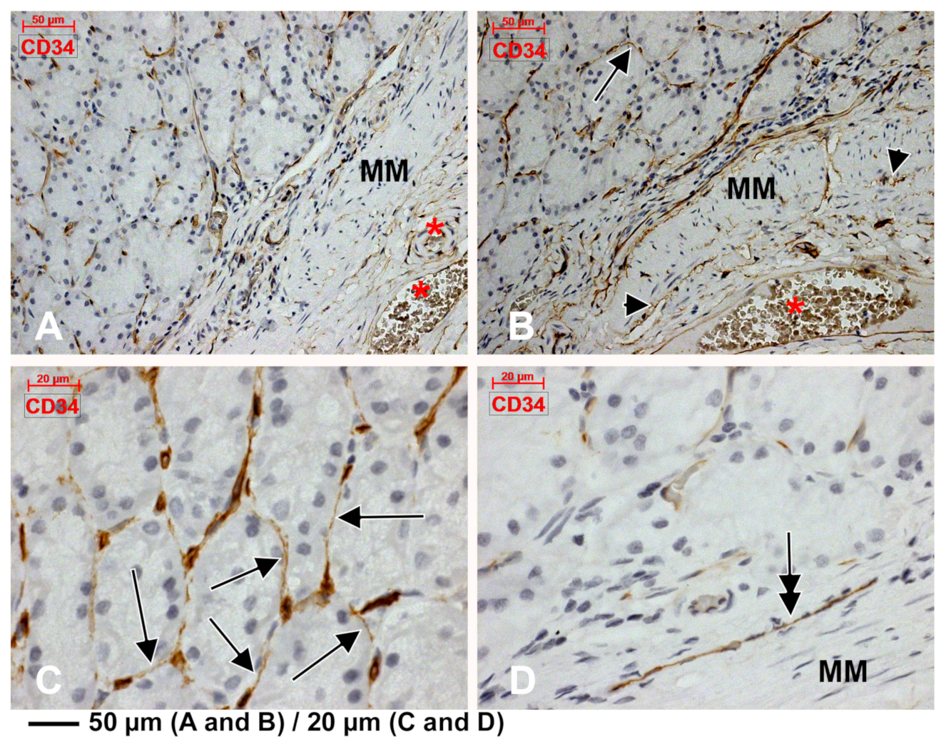 Medicina | Free Full-Text | An Immunohistochemical Study of