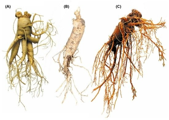 Ginseng for Liver Injury: Friend or Foe