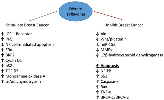 Dietary Isoflavones and Breast Cancer Risk