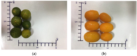 Traditional Small-Size Citrus from Taiwan: Essential Oils, Bioactive Compounds and Antioxidant Capacity