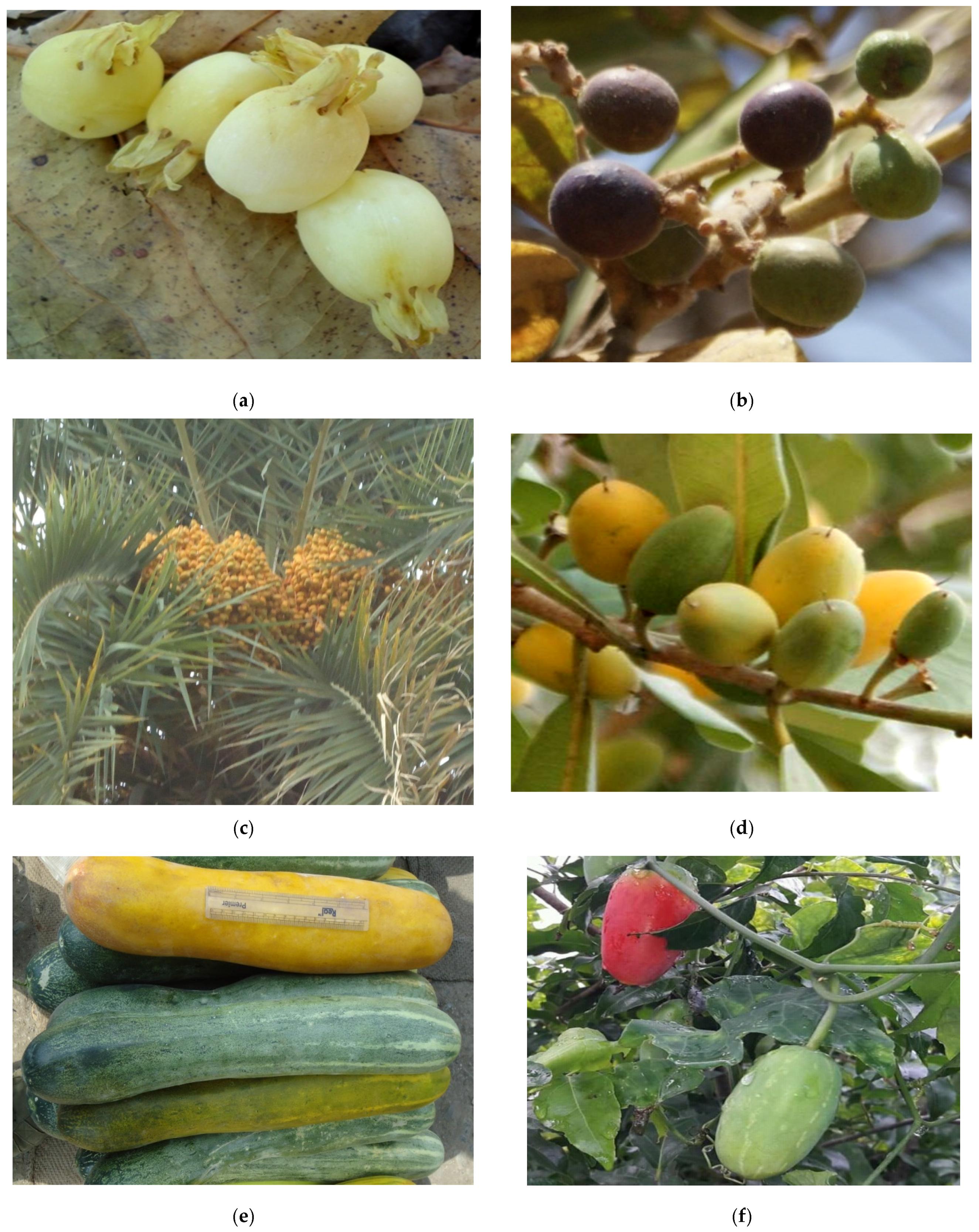 Medicines | Free Full-Text | Ancient Food Habits Dictate