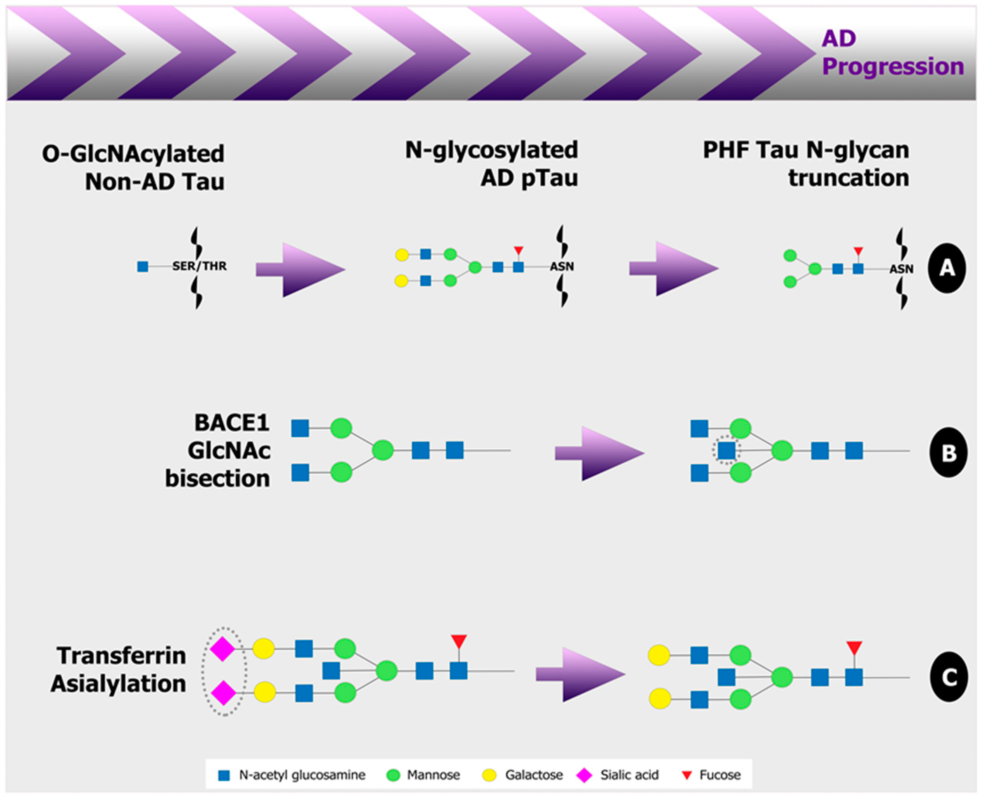 Medicines | Free Full-Text | Early Stage Glycosylation