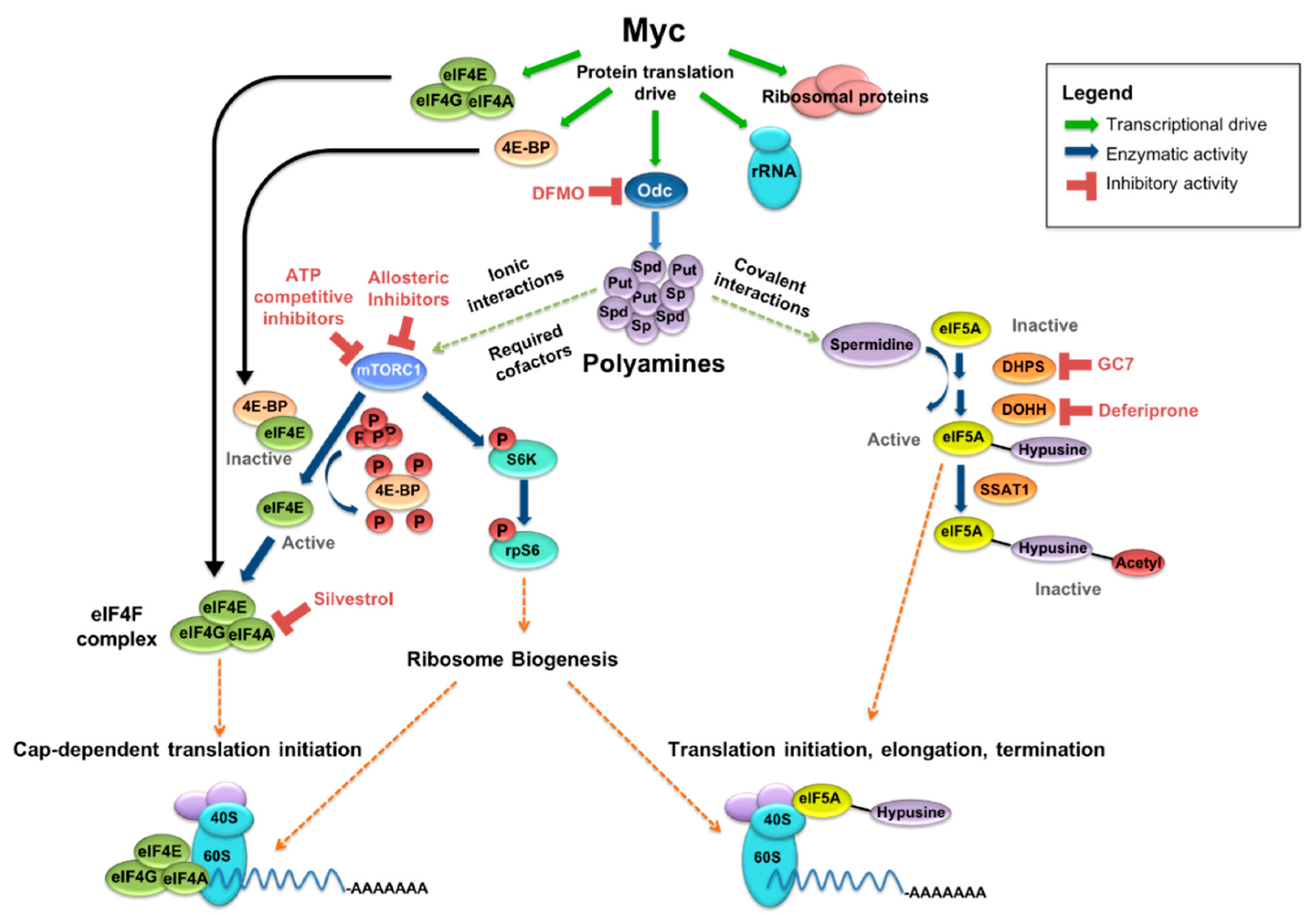 Medical Sciences | Free Full-Text | Myc, Oncogenic Protein