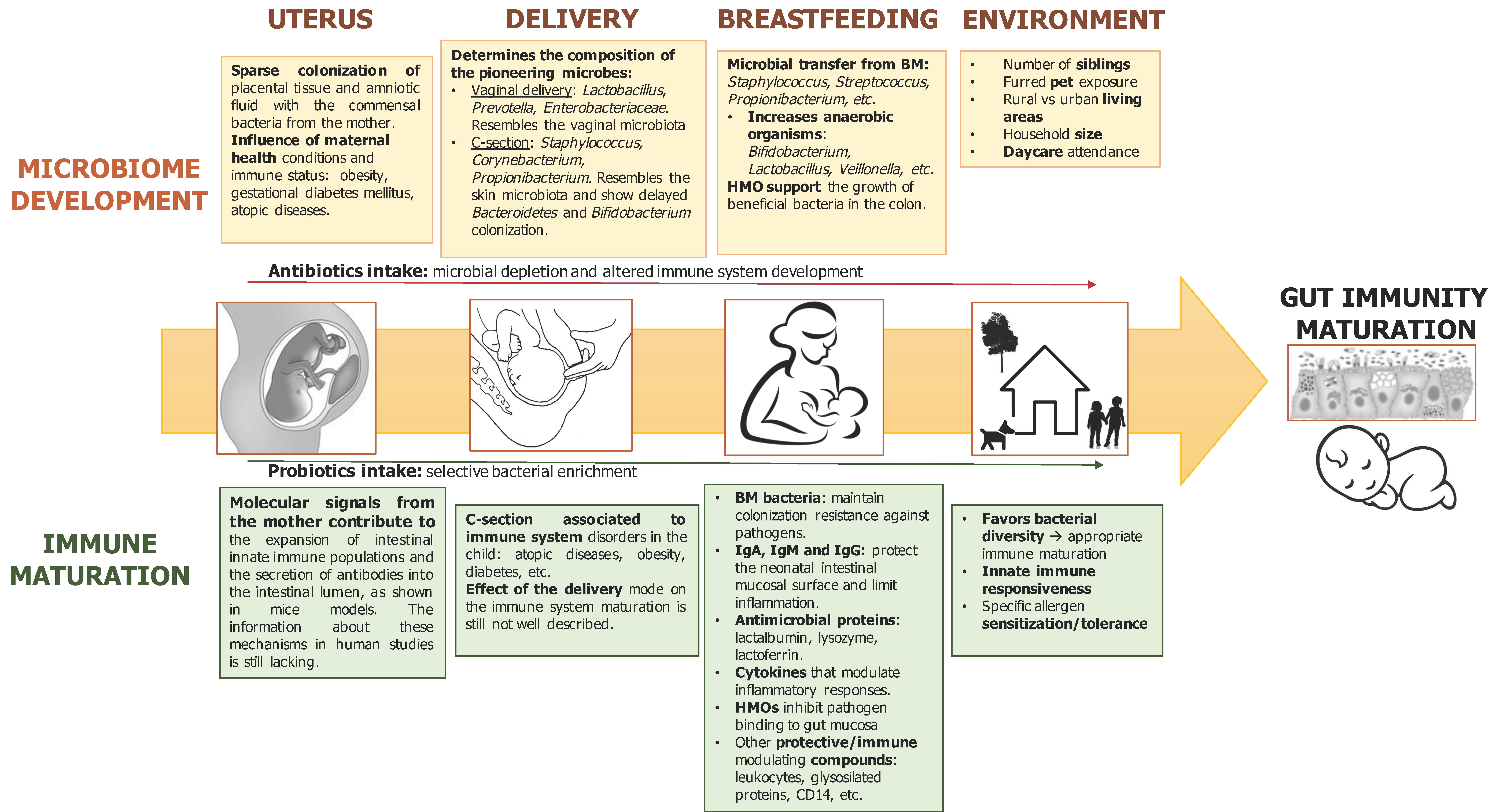 Features of the immunity of the newborn and its protection