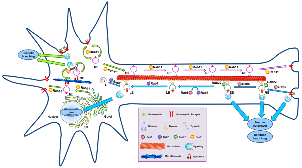role of integrins in cell invasion and migration pdf