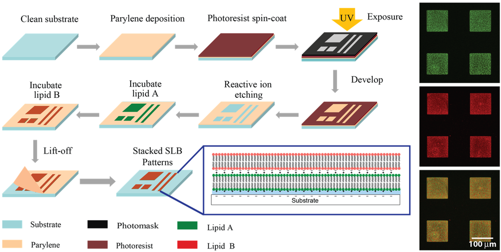 Membranes Free Full Text Multi Stacked Supported Lipid