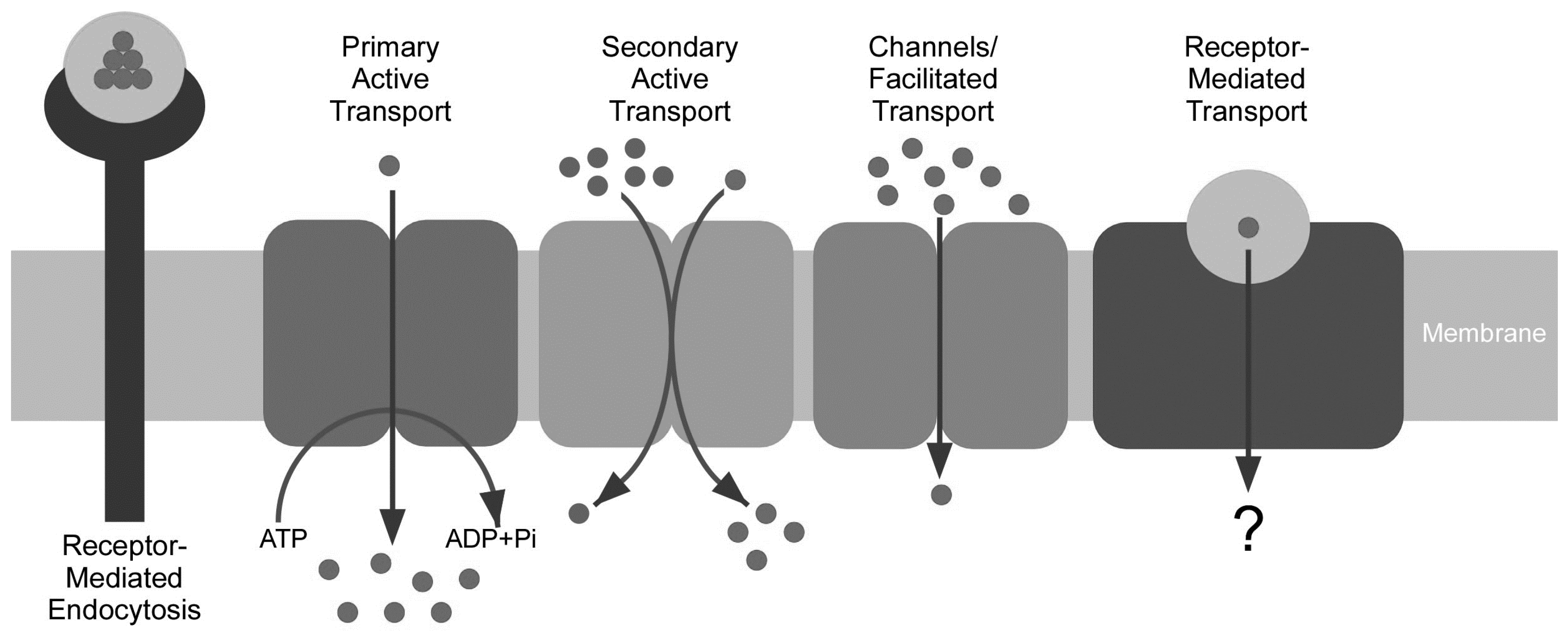 Membranes free full text vitamin a transport mechanism of the membranes 05 00425 g002 1024 pooptronica