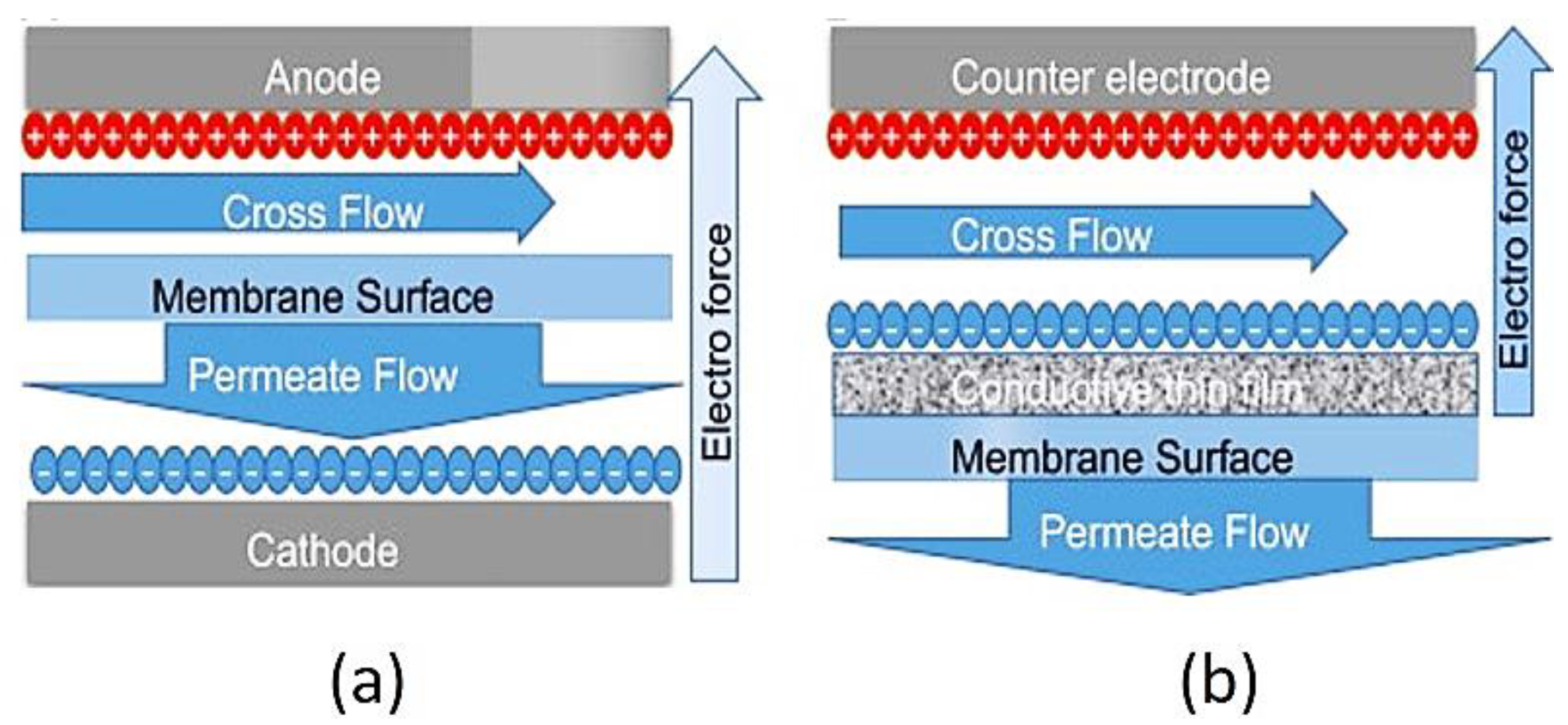 Membranes | Free Full-Text | Electro-Conductive Membranes for ...