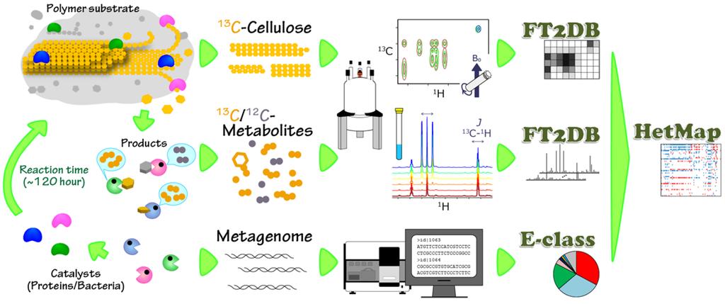Bacterial Cellulose Bacterial Cellulose bc