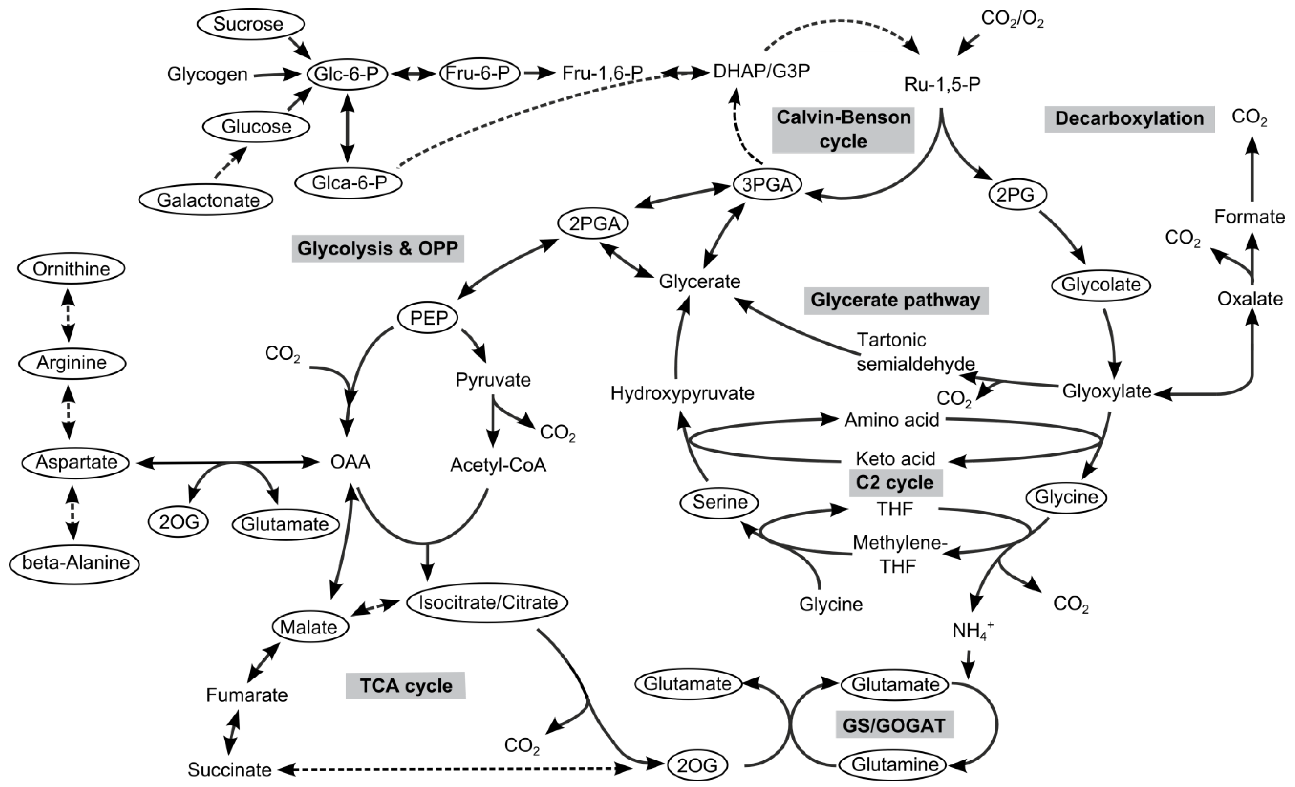 an analysis of cyanobacteria Metals in cyanobacteria: analysis of the copper, nickel, cobalt and arsenic homeostasis cyanobacteria are the only group of prokaryotes capable of performing.