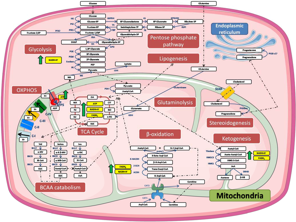 an analysis of biochemical pathways The mycoplasmas were amongst the first organisms for which the complete genome sequence was obtained and made available to the public domain (13 10 6) complementary information, such as the proteome of mycoplasma pneumoniae (26) and reconstructed pathways, has also been made available and can be.