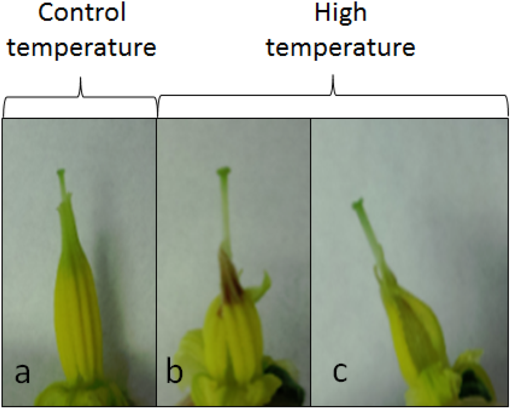high temperature tolerance in soybean High-temperature stress is usually associated with droughtheat stress and drought intensify damage to corn and soybeans but either may cause major crop injury alone the recent high temperatures, ie, record numbers of days above 90° f, and in some locales 100° f, have generated questions about the impact of high temperatures on corn and soybeans.