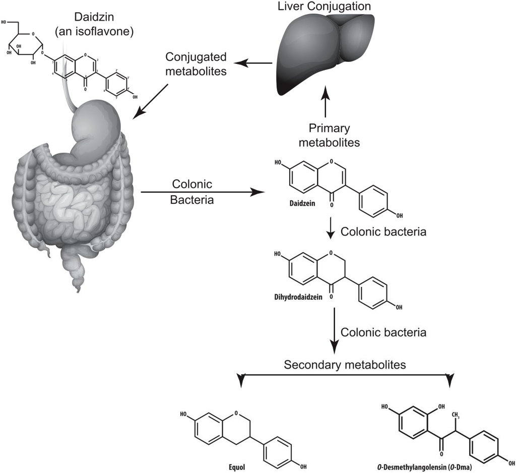 adverse effects of inhaled corticosteroid therapy