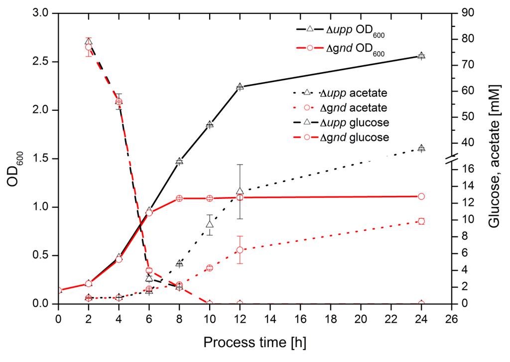 Gluconobacter oxydans