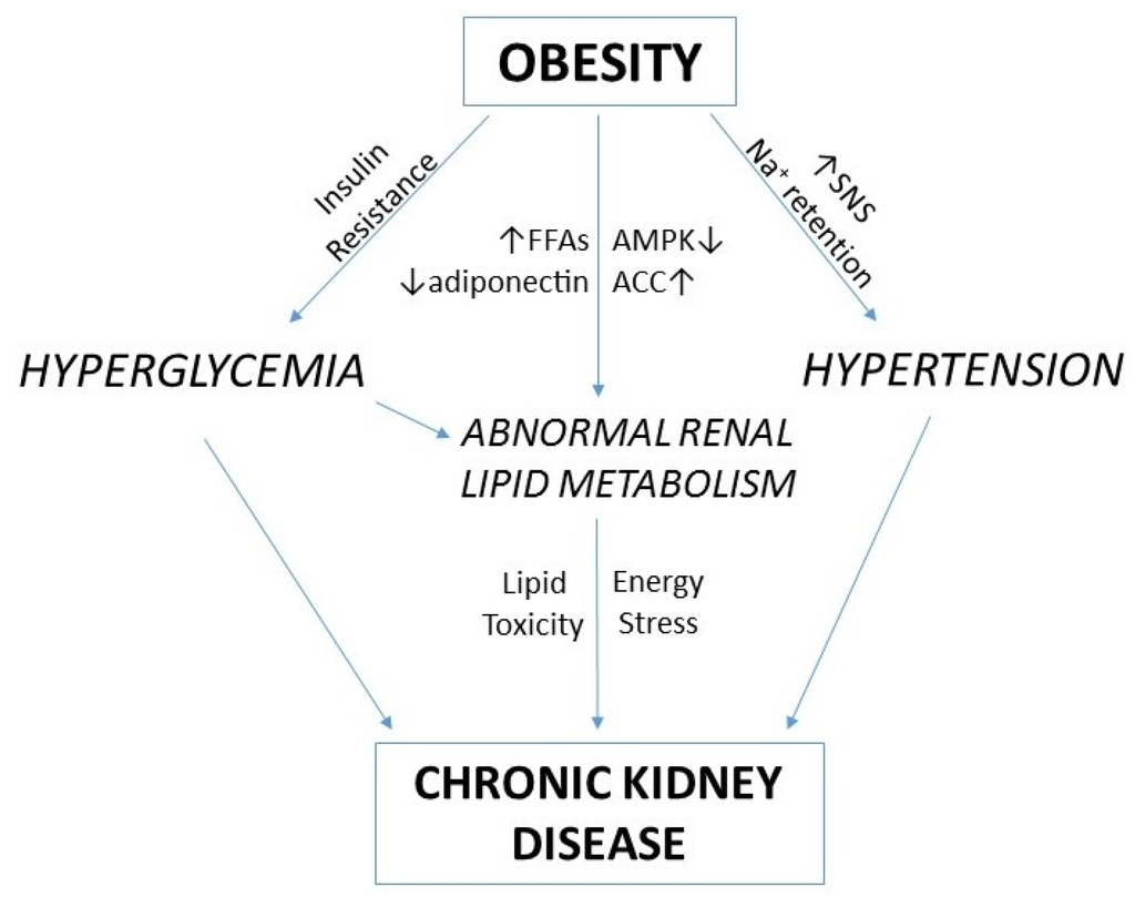 chronic disease obesity Burden of chronic disease in australia what are the statistics in  australia, the proportion of men and women aged 18 years and over that is  overweight.